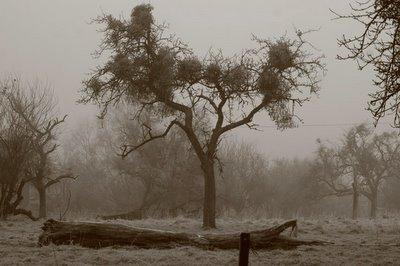 arbre sous le gel et la neige à Strivay-Plainevaux, photo dominique houcmant, goldo graphisme