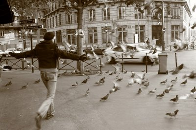 pict, image, paris, pigeons, femme, photo dominique houcmant, goldo graphisme