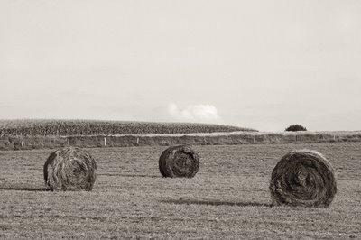rouleaux de foin dans la condroz près de Ellemelle (Ouffet), round hay bales, copyright dominique houcmant, goldo graphisme