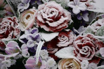 roses en plastique, photo dominique houcmant, goldo graphisme
