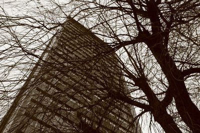 building europa seraing, belgique, arbre, photo dominique houcmant, goldo graphisme