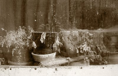 foto, dead flowers, nature morte, vitrine, photo dominique houcmant, goldo graphisme
