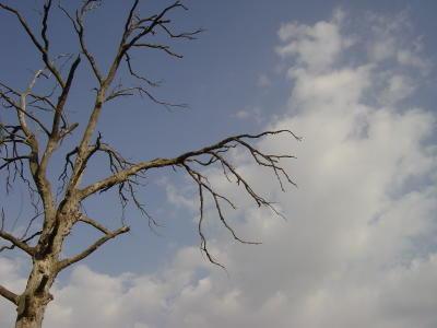 Árvore, céu e fogo. Foto do autor