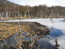 Beaver Dam Frozen
