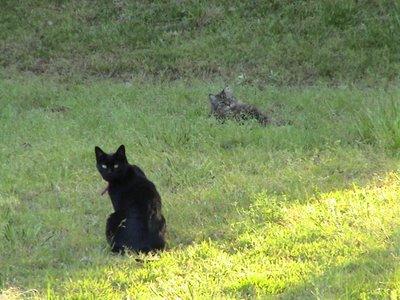 Eliza and Here Kitty Kitty