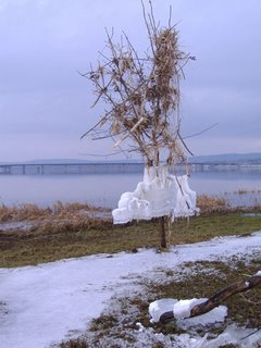 warp tree with ice