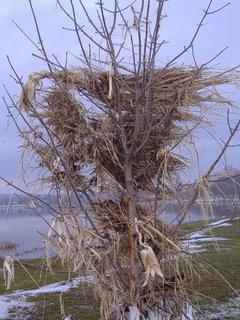 warp treeback