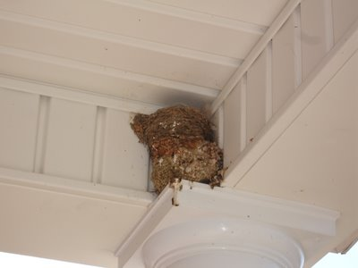 how to keep barn swallows from nesting on your porch