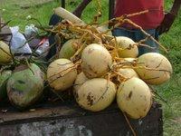 Coconuts in Trinidad/Kate Yuan