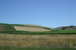 Santa Rosaのワイン畑