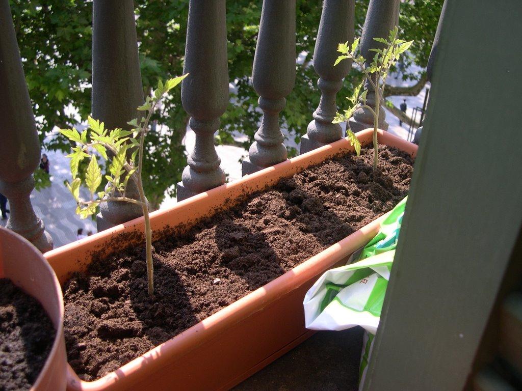 Verduras en mi balc n huerto urbano 19 la separaci n - Huerto urbano balcon ...
