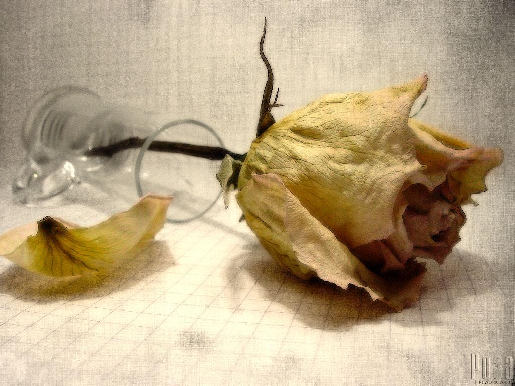 Как сделать чтобы завяли цветы