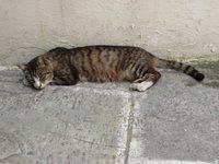Griekse kat