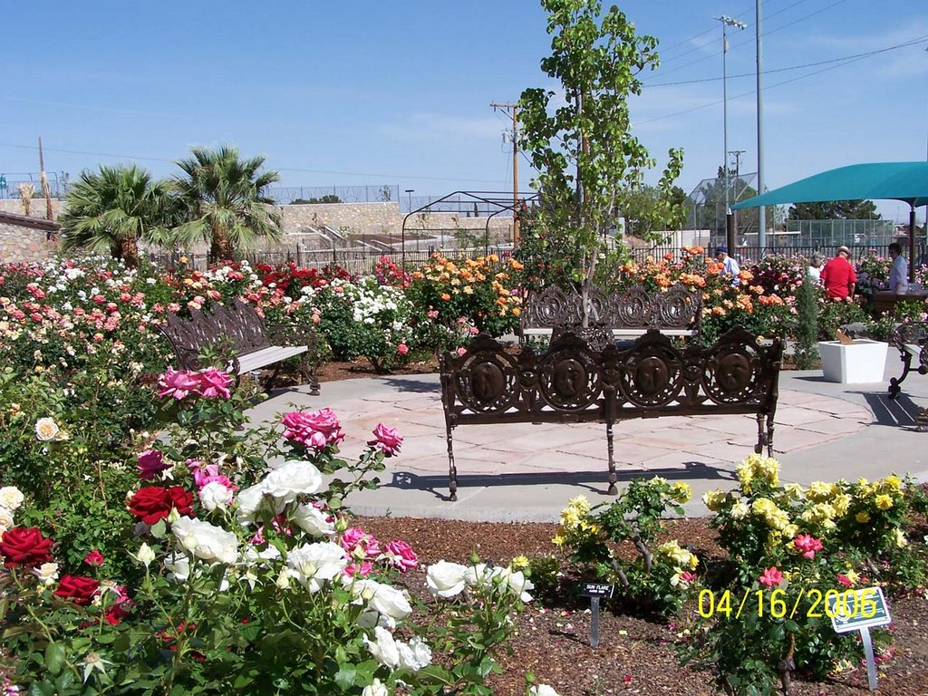 The El Paso Rose Society Provides Technical, Educational And Financial  Support Through Donations Of Plants And Materials.
