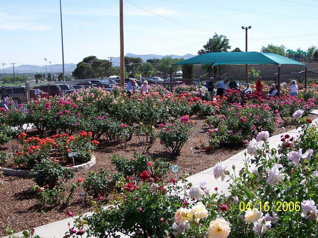 Marvelous EL PASO MUNICIPAL ROSE GARDEN 3418 Aurora Ave. / Copia St.