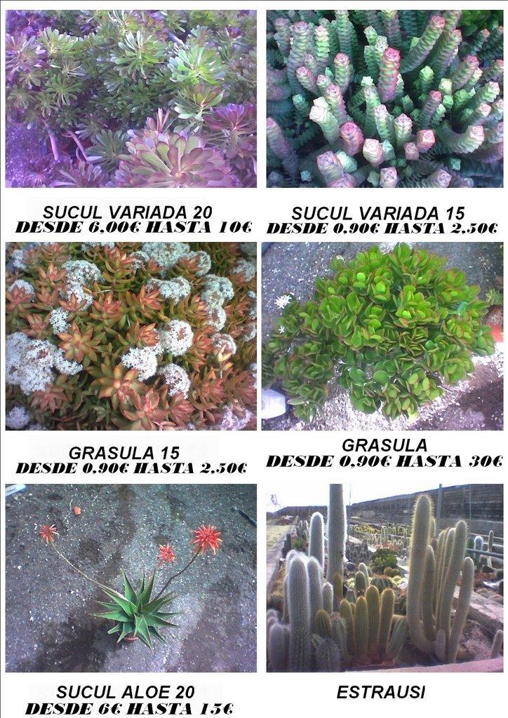 Decora con cactus y ceramicas cactus para interior y exterior for Cactus de exterior
