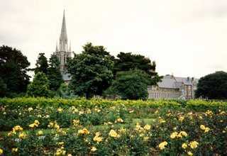 Roses in Tralee Town Park