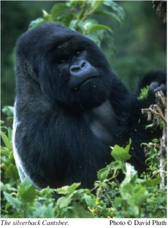 Gorillas Revisited with David Attenborough (2006) [PDTV (xvid)] preview 0