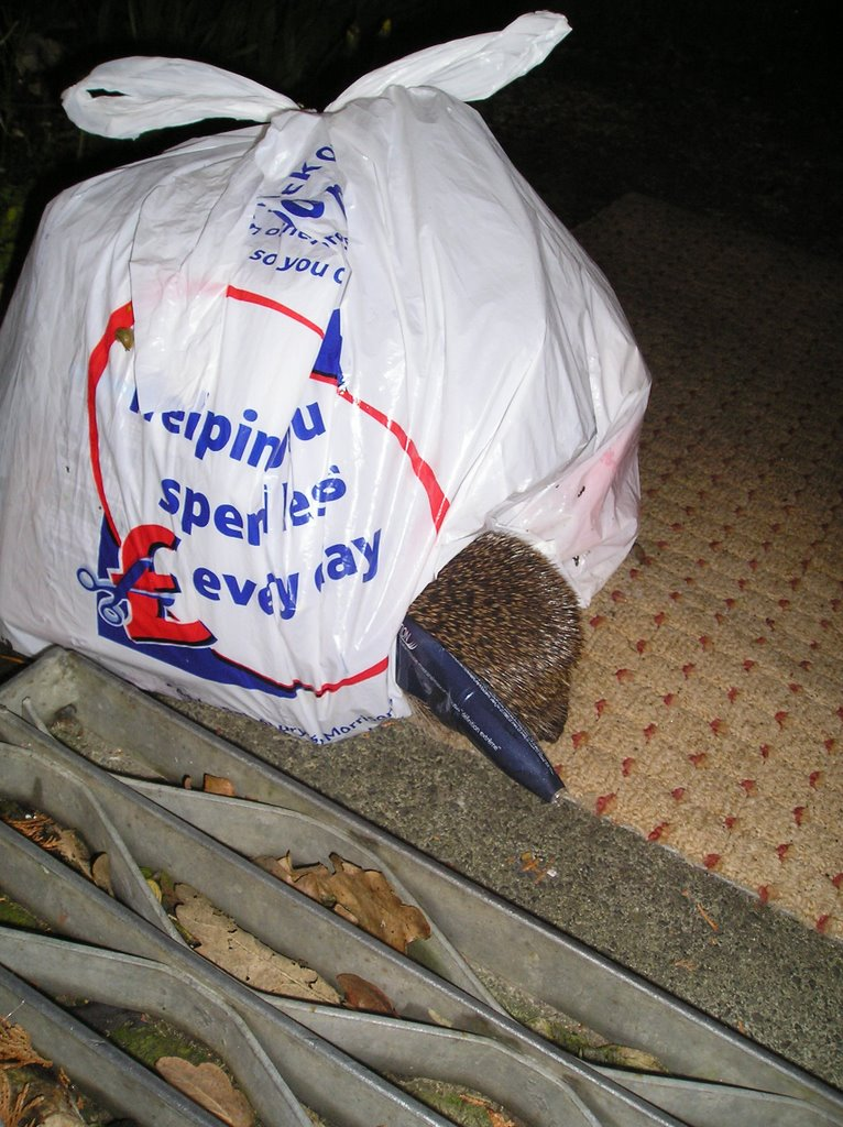 my hedgehog distraction Frumpy the hedgehog & friends, wellington, somerset 394 likes the life and times of frumpy the hedgehog and her prickly friends captured on film in.