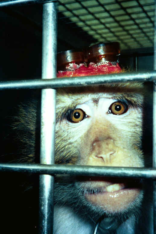 an analysis of the topic of vivisection experimentation on the animal species