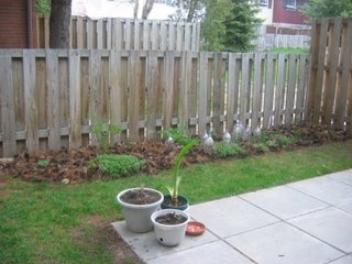 Janet's back yard garden