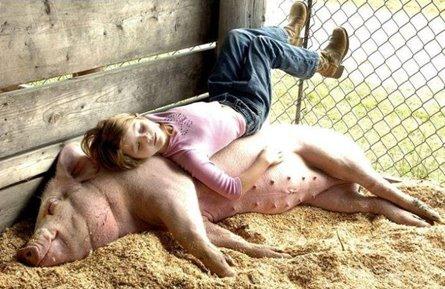 Pig Mattress