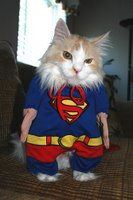 Cat dressed in a Superman cape