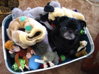 A dog named Noodle in a box of toys.