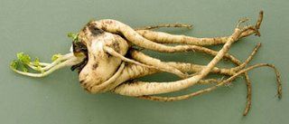 Winner of the Ugly Vegetable competition.