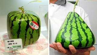 Square and pyramid shaped watermelons