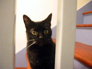 Batty the black cat - a favorite spot of hers, watching through the bannister