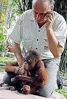 smuggled orangutans