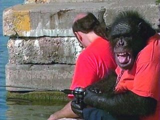 chimp fishing