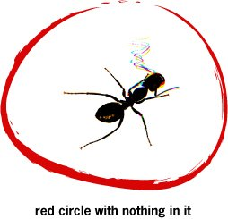 red circle with nothing in it - insect