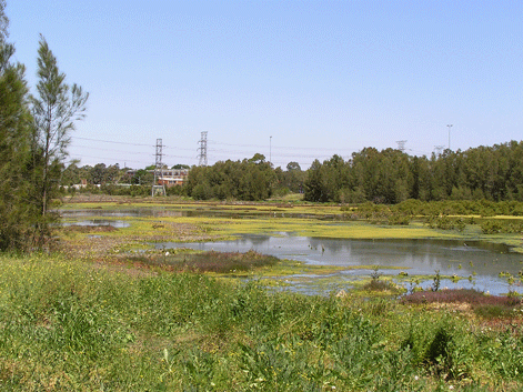 The Wetlands Next To Mason Park