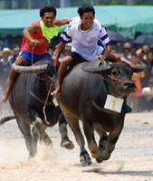 buffalo-race-festival