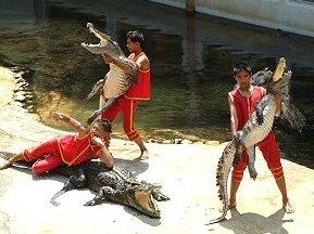Crocodile Farm Show Thailand