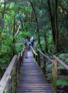 Doi Inthanon Walking Chiangmai Thailand