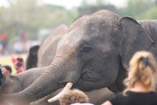 Elephant Festival Surin Thailand