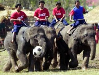 Elephant Round Up Competition Festival Surin Thailand
