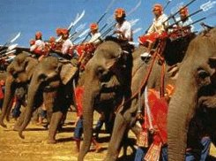 Elephant Round Up Festival Surin Thailand