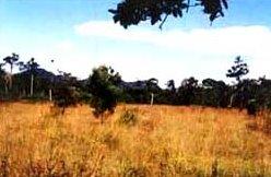 Wangpra Grassland Thaleban Satun Thailand