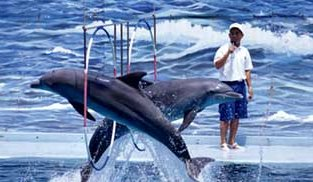 Dolphin_Show_in_Safari_World_Bangkok_Thailand