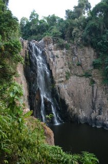 Forest_Khaoyai_Thailand