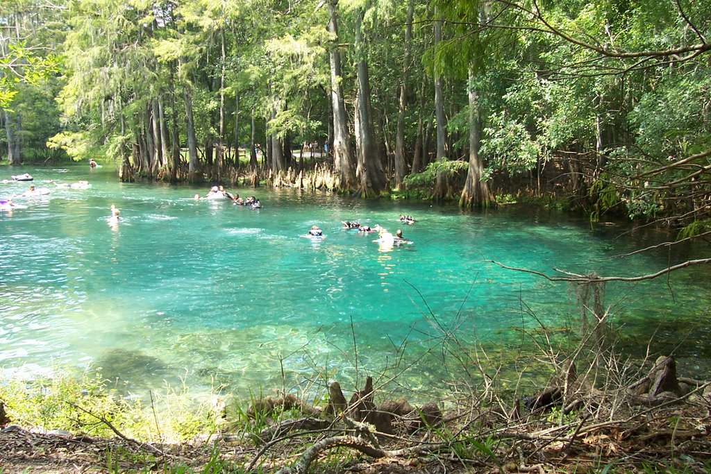 Florida Springs Manatee Springs State Park Levy County