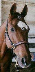 A dotty horse