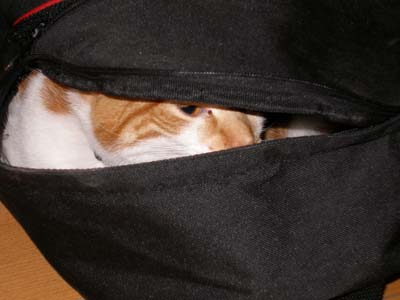 Beowulf the cat hides in a gym bag