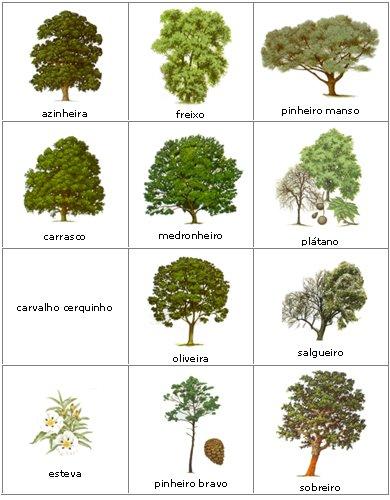 Bolotavoadora for Especies de arbustos