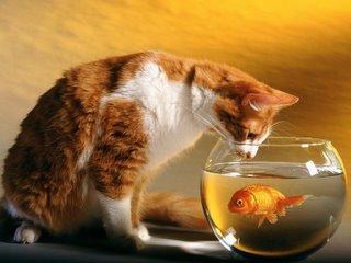 Cat%26FishBowl.1.jpg