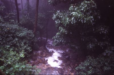 A stream in the rainforests of Bisle Reserve Forest, Sakleshpur taluk, Hassan District in the Netravathi river basin